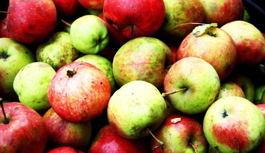 manzanas asturianas